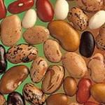 Dry Bean Diversity
