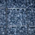 Blueberries at market