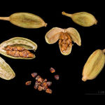 Cardamom pods (capsules) and seeds