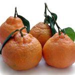 Satsuma (Mandarin) oranges