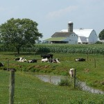 Amish Dairy Farm