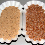 Amaranth (left) and Wheat (right)